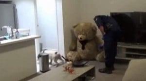 Teddy bear hides firearms and ammunition